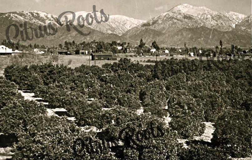 Claremont-El-Camino-Citrus-Association-Pomona-Valley